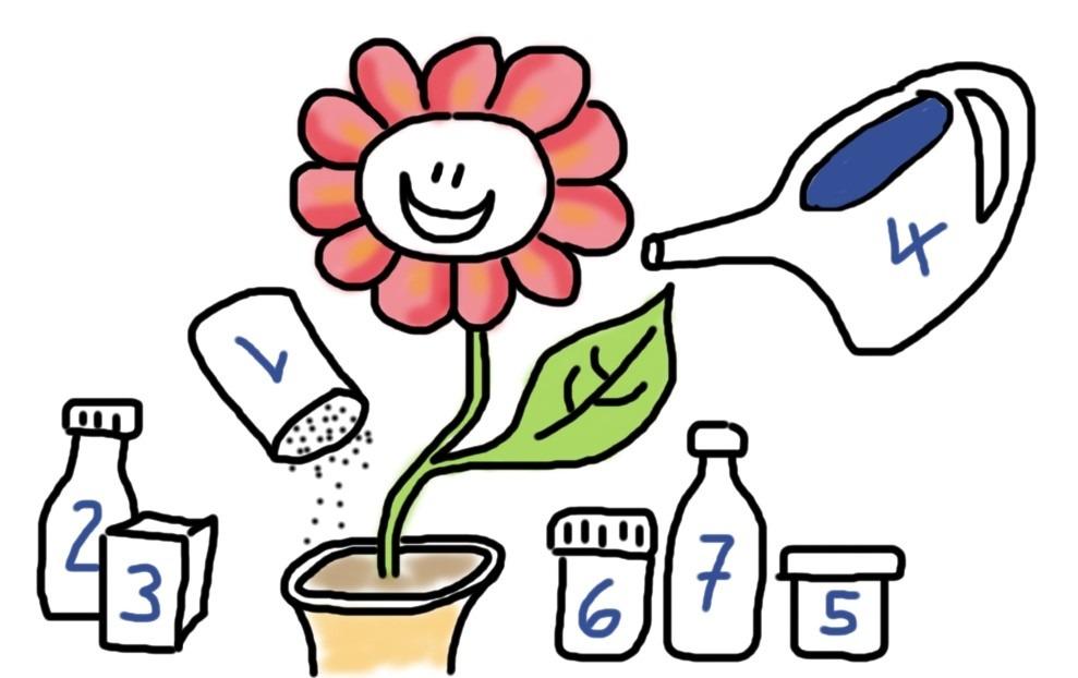 Blume und 7 Zutaten für ihr persönliches Wachstum